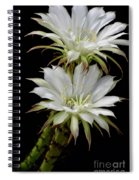 White Cactus Flowers Spiral Notebook