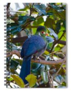 White-cheeked Turaco Spiral Notebook