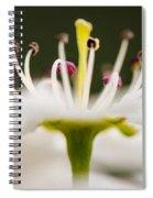 White Cherry Blossom Against Green Spiral Notebook