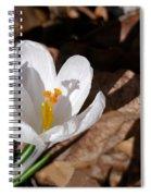 White Crocus Spiral Notebook
