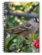 White Crowned Sparrow 1 Spiral Notebook
