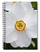 White Daffodil Spiral Notebook