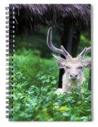 White Deer Spiral Notebook