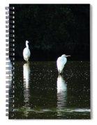 White Egrets Spiral Notebook