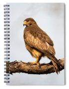 White-eyed Buzzard Butastur Teesa Spiral Notebook