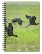 White-faced Ibis Rising, No. 2 Spiral Notebook