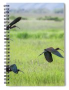 White-faced Ibis Rising, No. 3 Spiral Notebook