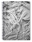 White Feathers #2 Spiral Notebook