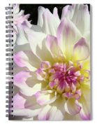White Floral Art Bright Dahlia Flowers Baslee Troutman Spiral Notebook
