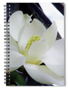 White - Florida - Beauty Spiral Notebook