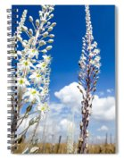 White Flowering Sea Squill On A Blue Sky Spiral Notebook
