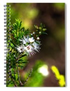 White Flowers Of Kunzea Ambigua Spiral Notebook