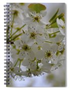 White Flowers On A Tree Spiral Notebook