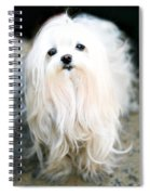 White Fluff Spiral Notebook