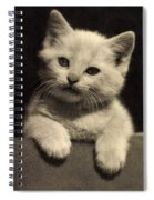 White Fluffy Kitten Spiral Notebook