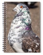 White-gray Pigeon Profile Spiral Notebook