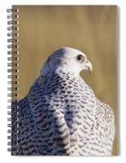 White Gyrfalcon Spiral Notebook