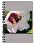 White Hibiscus Bloom With Bumble Bee Spiral Notebook