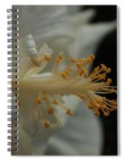White Hibiscus Spiral Notebook