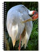 White Ibis At The Zoo Spiral Notebook