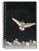 White Ibis In Flight Over Flock Spiral Notebook