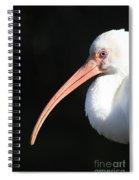 White Ibis Profile Spiral Notebook