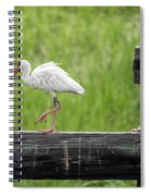 White Ibis Stepping Out Spiral Notebook