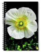 White Iceland Poppy Spiral Notebook