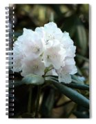 White Inflorence Of  Rhododendron Plant Spiral Notebook