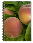 White Lady Peaches On A Branch Spiral Notebook