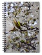 White Magnolia Spiral Notebook
