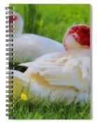 White Muscovy Ducks Spiral Notebook