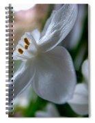 White Narcissi Spring Flower 4 Spiral Notebook