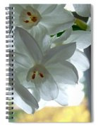 White Narcissi Spring Flower Spiral Notebook