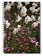 White Narcissus With Pink English Daisies In A Spring Garden Spiral Notebook