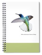 White Necked Jacobin Trinidad Spiral Notebook