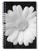 White On Wood Spiral Notebook