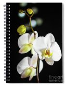 White Orchid On Black Bw Spiral Notebook