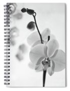 White Orchid On White Bw Spiral Notebook