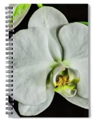 White Orchid On Black Spiral Notebook