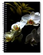 White Orchid With Dark Background Spiral Notebook