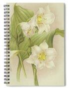 White Orchids   Eucharis Sanderiana Spiral Notebook