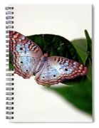 White Peacock Butterfly 2 Spiral Notebook