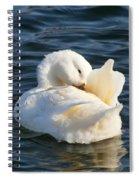 White Pekin Duck In Blue Water Preening Spiral Notebook