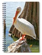 White Pelican By Cypress Tree Spiral Notebook