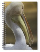 Shy White Pelican Spiral Notebook