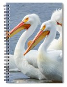 White Pelicans At Nelson Lake Spiral Notebook