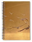 White Pelicans Flying Through Morning Mist Over River Spiral Notebook