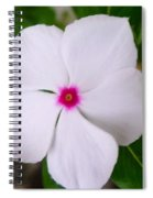 White Periwinkle Flower 1 Spiral Notebook