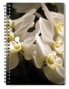 White Phalaenopsis Blossom Spiral Notebook